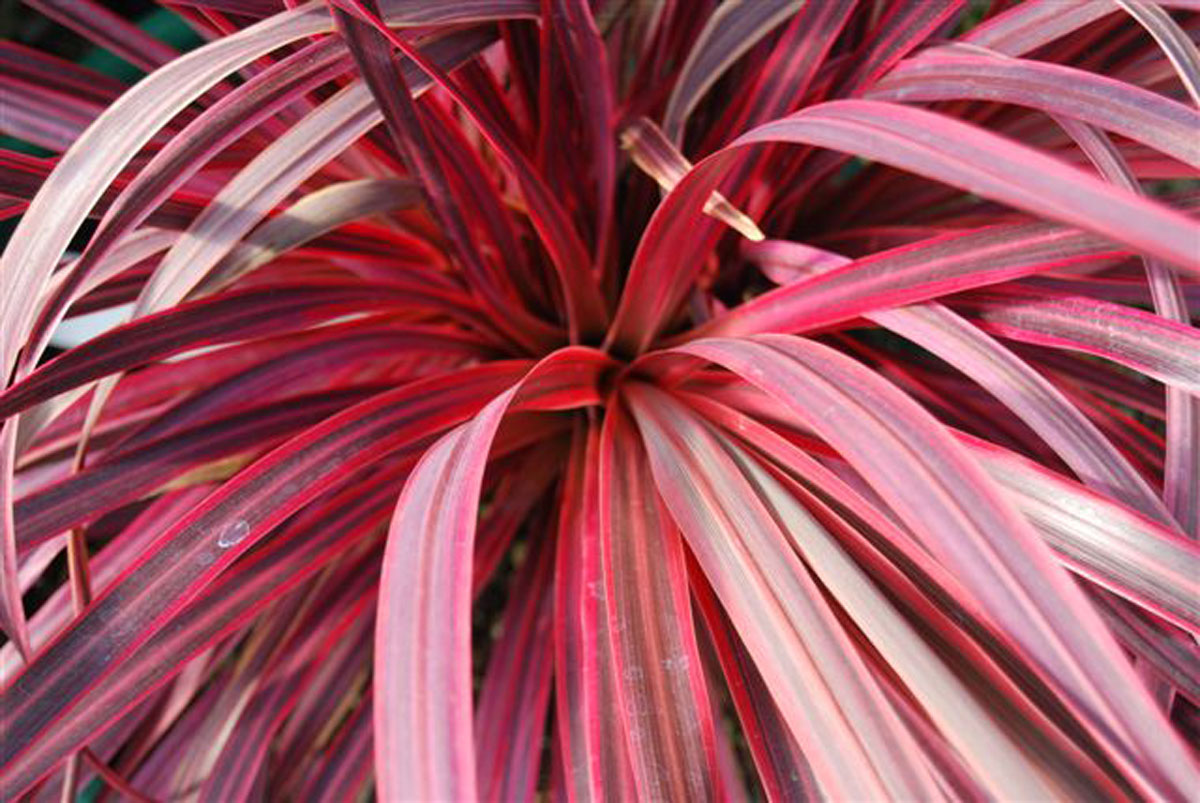 la collection globe planter cordyline salsa