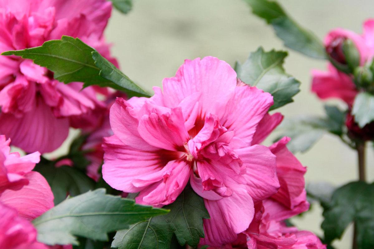 Planter Un Hibiscus : la collection globe planter hibiscus summer party ~ Nature-et-papiers.com Idées de Décoration