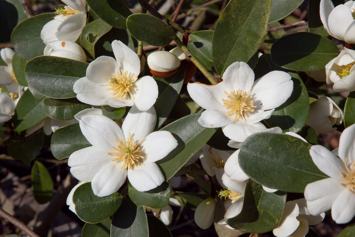 la collection globe planter magnolia gail 39 s favourite. Black Bedroom Furniture Sets. Home Design Ideas