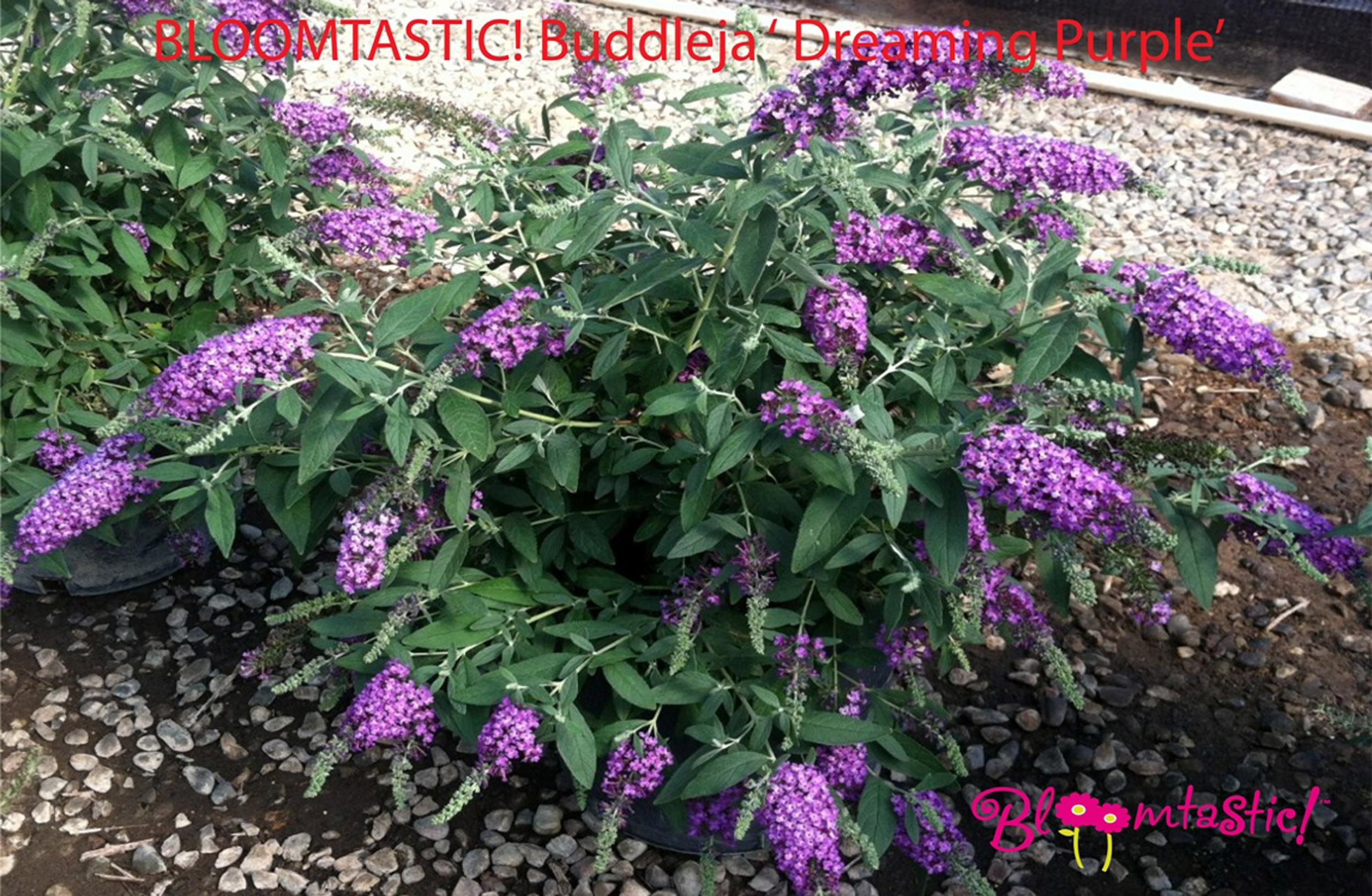 la collection globe planter - arbre aux papillons - bloom tastic