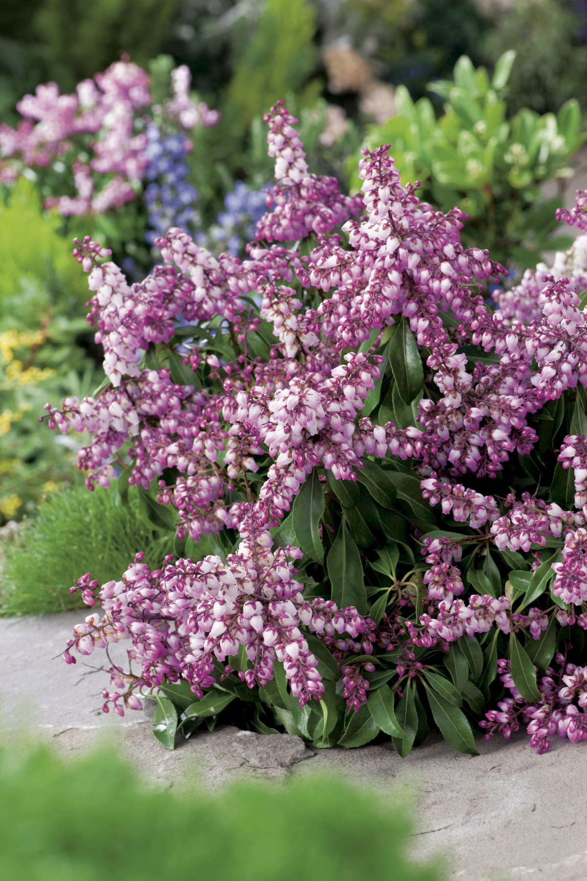 La collection Globe planter - Andromède du Japon - Pink ...
