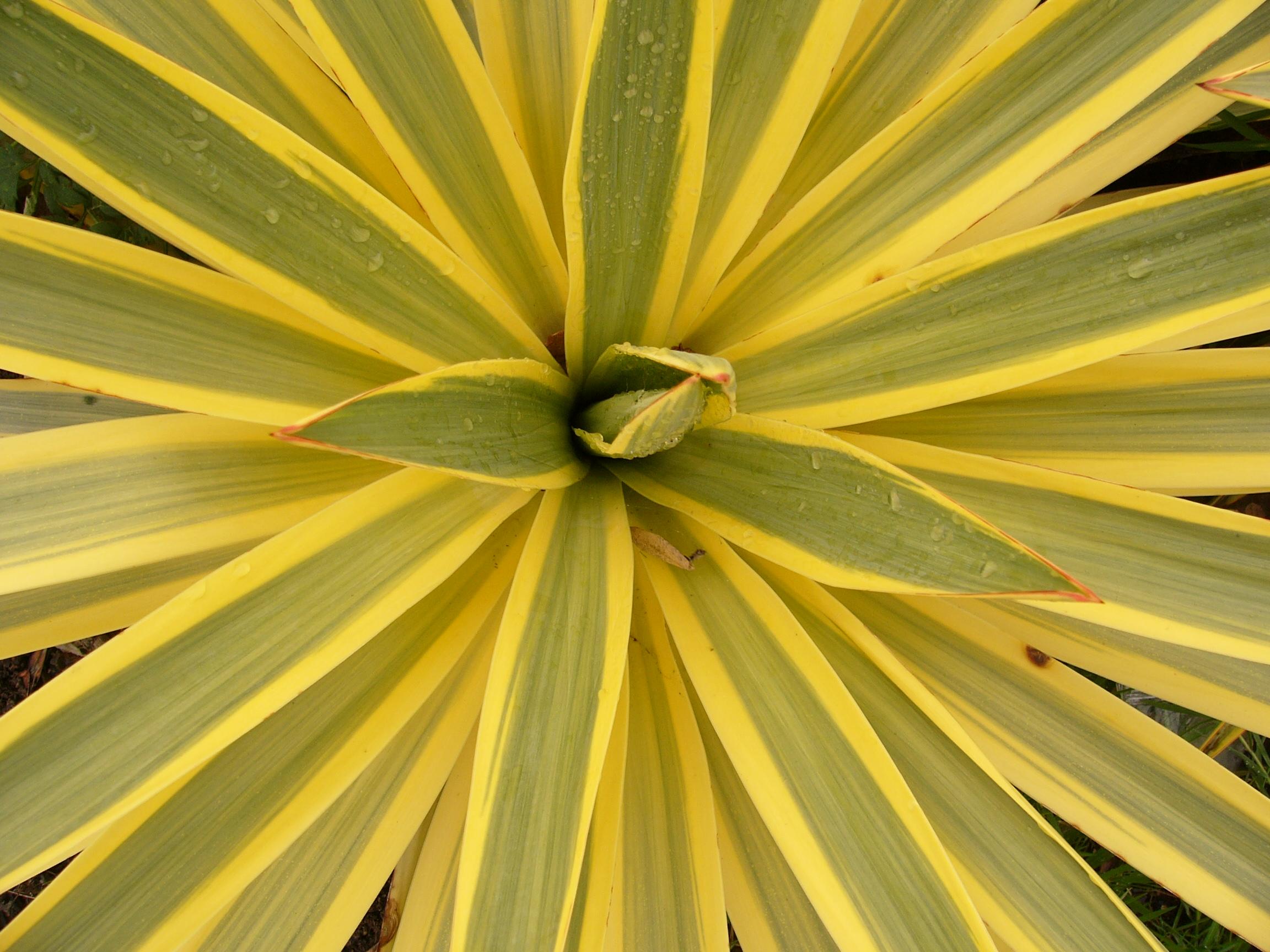 la collection globe planter - yucca - bright star