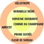 Rosa - hybride - Constance Mozart® / La Belle Ferronnière - Kormaccap